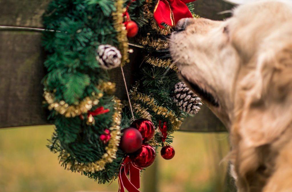 Keep Your Pet Safe This Holiday Season